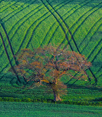 Tractor trails (snowyturner) Tags: light tractor tree field lines spring trails devon agriculture southhams modbury sheepham
