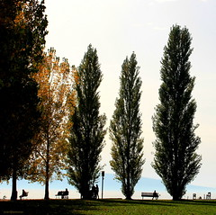 between the trees (overthemoon) Tags: autumn people lake mountains square schweiz switzerland suisse silhouettes sunny unescoworldheritagesite benches svizzera léman beacon cully sundayafternoon vaud poplars lavaux romandie winches imagepoésie