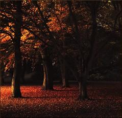 The union of fall (Marie Granelli) Tags: autumn tree skne october sweden explore trelleborg sdersltt d3000