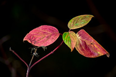 Color Coordination - Autumn Leaves