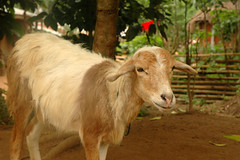 Wli Todzi: Clinic & School (MadisonBoratto) Tags: africa mountain up goat ghana rise operation region volta groundswell wli todzi