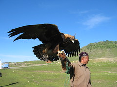 Kazakh with eagle in Xinjiang, China (mbphillips) Tags: xinjiang 新疆 中国 west 中國 شىنجاڭ fareast asia アジア 아시아 亚洲 亞洲 china 중국 mbphillips canonixus400 geotagged photojournalism photojournalist travel
