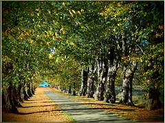 Herbstspaziergang - Ostsee in Sicht! (Ostseeleuchte) Tags: sea see balticsea ostsee 2012 herbstspaziergang autumnwalk nwm grosschwansee ostseeleuchte
