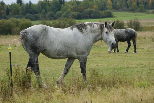 2012-09-30_Percheron