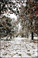 Fallen leaves (T.E.F) Tags: winter snow fall leaves suomi finland landscape tokina fallen hanko 1785 lumi talvi maisema 1116 lehdet hangö canon7d pudonneet