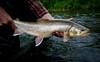 Alaska Fly-out Fishing Lodge 24