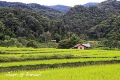 PhamonVillage-DoiInthanon-ChaengMai-Trip_By-P r i m t a a_E10886166-063