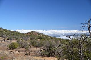 Mauna Kea (DSC_4255)