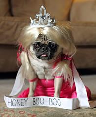 Honey Boo Pig, Halloween 2012 (WeeLittlePiggy) Tags: dog pet halloween costume pug mydoghatesme honeybooboo
