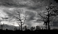 Veins (basselal) Tags: trees sky bw monochrome silhouette clouds highcontrast day7 day7365 week2theme 60225mm 3652013 365the2013edition pad2013365 07jan13