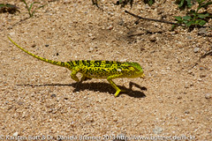 "Gecko • <a style=""font-size:0.8em;"" href=""http://www.flickr.com/photos/56545707@N05/8365046770/"" target=""_blank"">View on Flickr</a>"
