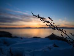 Cool (Daniel Williams) Tags: sunset lake burlington vermont unitedstates olympus omd em5