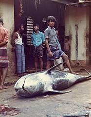Sri Lanka 81 (Globetreka) Tags: boy people fish men fisherman asia candid streetphotography streetlife srilanka mygearandme mygearandmepremium