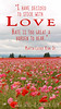 MLK Love quote with poppies (Send-A-Smooch) Tags: pink flowers red love king martin quote valentines mlk luther poppiesfield