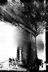 Windy Morning by the Lake (hollykl) Tags: blackandwhite abstract tree photomanipulation digitalart lakeeola vividimagination arteffects shockofthenew sharingart creativeartphotography awardtree vanagram netartii