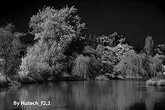 Sumsion Secondary lake and trees (Hutech_f2.2 (I'm staying too!)) Tags: bw lake gardens landscape nikon australia infrared willows wodonga sumsion