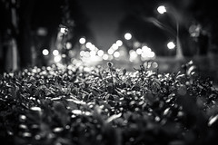 20130126_01_Night Bushes (foxfoto_archives) Tags: ex monochrome japan night canon eos 50mm tokyo mark f14 shibuya sigma ii harajuku  5d   bushes dg     hsm