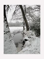 Winters... (Geziena) Tags: sony sneeuw boom wit winters asserbos assen koud 2013 dschx1 wintersplaatje