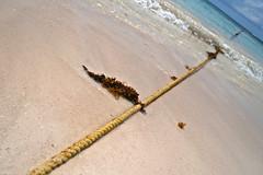 atado a la tierra. (Aderval Fotografa) Tags: sea costa beach water mexico cuerda coast mar sand agua riviera waves maya yucatan playa rope arena algae rivieramaya olas oceano algas dutchangle aderval anguloholandes