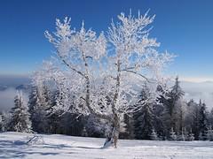 Valge ja sinine (anuwintschalek) Tags: schnee trees white mountain snow tree berg landscape austria frost skiing skiresort getty lumi puu weiss bäume baum niederösterreich raureif puud loodus reif winterlandscape schifahren unterberg valge härmatis mägi schigebiet hoarsfrost suusatamas epl1 talvemaastik olympusepl1 suusakoht