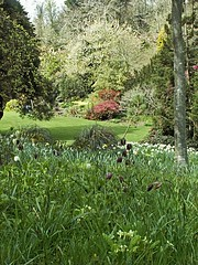Spring at Trelissick NT Cornwall 2006 (Cornishcarolin Back boooo. Playing catch up!) Tags: flowers nature cornwall nationaltrust fineartgallery sleepingtime top20greenish naturescreations natureisallallinnature trelissickgardensnt