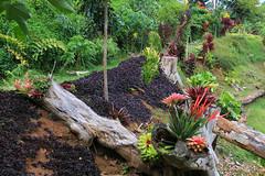 Princeville_Botanical_Gardens-7 (Chuck 55) Tags: princeville botanical gardens kauaihawaii kauai