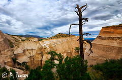 Desert Tree and Hoodoos (Sol y Luz Photography (aka love_2_see_the_world)) Tags: newmexico nm tentrocks rockformations canyon horizon vista landscape hoodoo deadtree desert