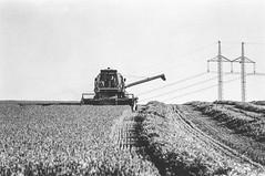 Harvest (smn.krsk) Tags: czech nature canon eos5000 35mm film bnw bw black white blackandwhite ishootfilm filmisnotdead harvest field jupiter iso100 foma fomapan