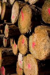ckuchem-8299 (christine_kuchem) Tags: abholzung baum baumstmme bume einschlag fichten holzeinschlag holzwirtschaft wald waldwirtschaft