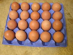 Piggotts Riverside Poultry Farm 20 Large Hen Eggs 2 x 3.39 13092016 29-08-2016 - Box  2 - Egg Weights (Lord Inquisitor) Tags: piggotts hen eggs large heneggs eggcarton 13092016