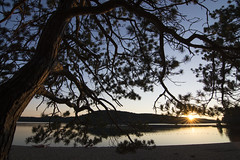 Achray Beach sunset 2016 (Barbara A. White) Tags: algonquinpark achraybeach sunset tree silhouettes lensstar grandlake landscape september canada