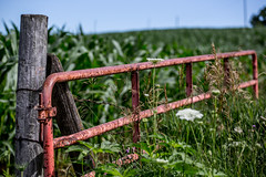 Red Gate (Phil Roeder) Tags: jacksoncounty iowa canon6d canonef70200mmf4lusm farm rural agriculture corn red gate fence