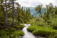 Stream (P. Burtu) Tags: sverige sweden hiking nature natur vildmark wilderness wild re duved norrland jmtland skog forest trd tree bck vatten water sommar summer clouds moln