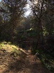 (emed0s) Tags: cris kira dog greyhoud trail path
