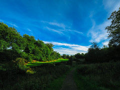 A walk in the glen (stckrboy) Tags: grass leaves summer scotland tree bright forest trees outdoor day green blue glen bluesky clouds lanarkshire airdrie