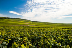 Champagne (theseBoetz) Tags: blue champagne clouds france grapes hills landscape sky vines green polarizer vineyards white wine