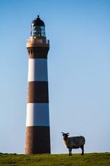 North Ronaldsay Icons (Gordon Mackie) Tags: northronaldsay sheep lighthouse orkney stevenson