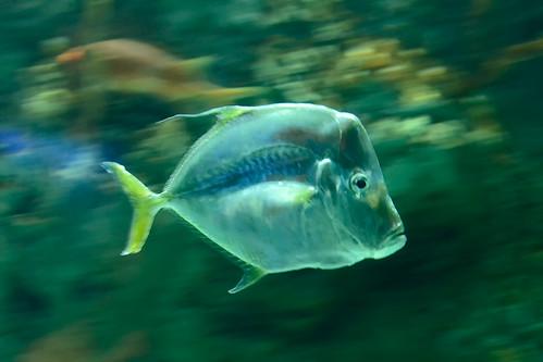 PanningFish_DonaldScarinci_2012WEB