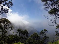 Foggy Na Pali Coast on Kauai (trailwalker52) Tags: forest hawaii rainforest hiking trail kauai napali