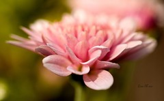 PA149699 copy (LisaNC) Tags: flower mushroom yard 50mm e500