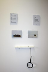 my work in an exhibition (Charlie Bissett) Tags: nature observation wasp natural bugs mosquito installation magnify sarcasm magnification urbandictionary deffinitions