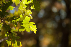 2012-242 (12Jeepgirl~Never look back...) Tags: statepark park light tree fall nature leaves outdoors nikon bokeh iowa saylorvillelake d700