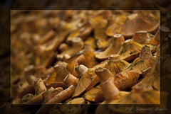 Mercato Boqueria Barcellona #1 (Giannotti_Paolo) Tags: barcelona stilllife food mushrooms nikon pattern funghi mercato barcellona paologiannotti