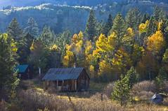 DSC03478 (mingzkl) Tags: autumn mountain fall cabin laketahoe foliage summicron aspen hopevalley leica50mmf2dr sonynex7