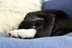 Darcy and his adorable rabbit feet. (Lorna-Elizabeth) Tags: white black rabbit feet cat canon lens kitten adorable sleepy curled 1855mm 600d