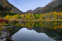 Mirror of Autumn (Darvin Atkeson) Tags: morning travel blue camping autumn trees light red vacation sky orange usa mountain lake snow west color reflection tree art fall nature water yellow forest landscape photography mirror nikon grove dam nevada sierra beaver alpine wilderness aspen lundy d800 easternsierra darvin atkeson darv liquidmoonlightcom lynneal