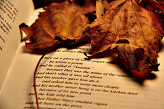 Text (becca speen) Tags: autumn nature leaves project movie book photo text picture charlie emmawatson infinite perks perksofbeingawallflower stephenchbosky loganlerhman
