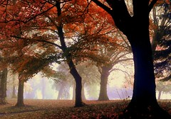 Autumn has landed (Jason Gambone74) Tags: park autumn red tree leaves fog branch