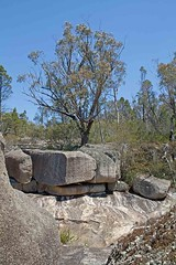 Tree on rock (mgjefferies) Tags: geotagged australia cascades queensland granitebelt mgjefferies girraweennp geo:country=australia geo:lat=28837118 geo:lon=151980169
