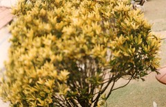 *26 Analog (Zenit 122 58mm) (Clara Rubim) Tags: camera yellow analog photo flickr zenit papel 122 fotogrfico tumblr